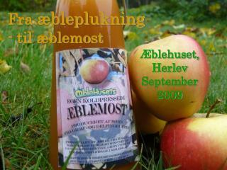 Fra  æbleplukning - til æblemost
