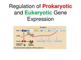 Regulation of  Prokaryotic  and  Eukaryotic  Gene Expression