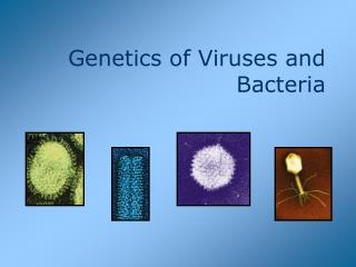 Genetics of Viruses and Bacteria