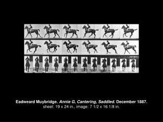 Eadweard Muybridge.  Annie G, Cantering, Saddled . December 1887.