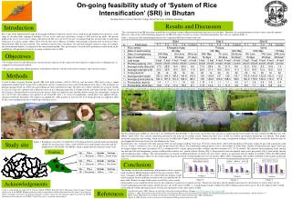 On-going feasibility study of 'System of Rice  Intensification' (SRI) in Bhutan