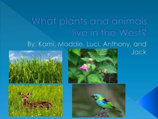What plants and animals live in the West?