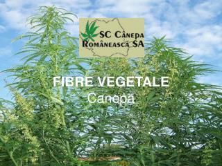 FIBRE VEGETALE Canepa