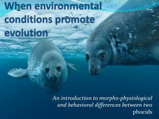 When environmental conditions promote evolution