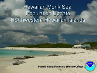 Hawaiian Monk Seal Population Update Northwestern Hawaiian Islands