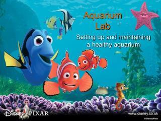 Aquarium  Lab