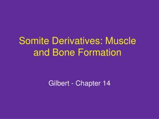 Somite Derivatives: Muscle and Bone Formation