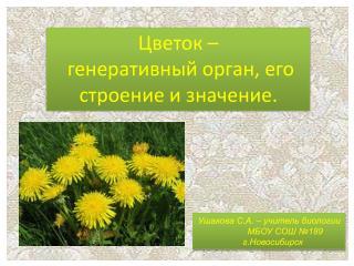 Цветок – генеративный орган, его строение и значение.