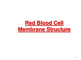 Red Blood Cell Membrane Structure
