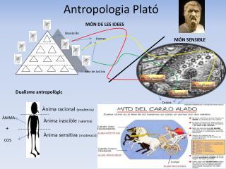 Antropologia  Plat�