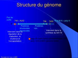 Structure du génome