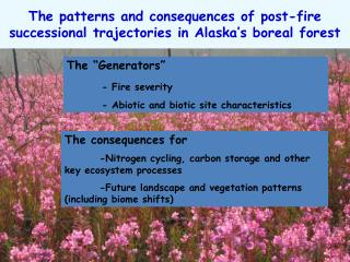The patterns and consequences of post-fire successional trajectories in Alaska's boreal forest