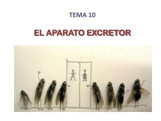 TEMA 10 EL APARATO EXCRETOR