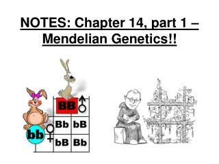 NOTES: Chapter 14, part 1 – Mendelian Genetics!!