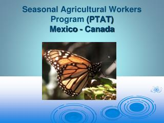 Seasonal Agricultural Workers  Program (PTAT) Mexico  - Canada