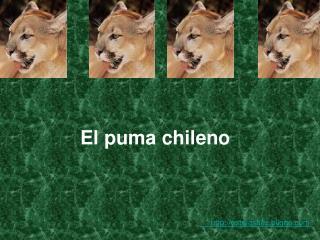 El puma chileno