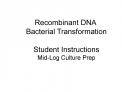 Recombinant DNA  Bacterial Transformation  Student Instructions Mid-Log Culture Prep