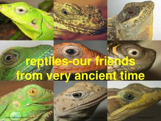 reptiles-our friends from very ancient time