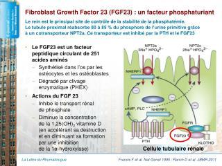 Fibroblast Growth Factor 23 (FGF23) : un facteur phosphaturiant