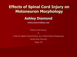 Effects of Spinal Cord Injury on Motoneuron Morphology