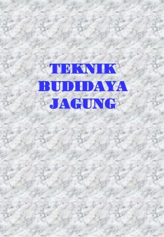 TEKNIK BUDIDAYA JAGUNG