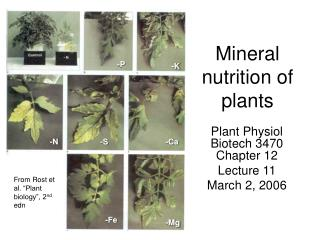 Mineral nutrition of plants