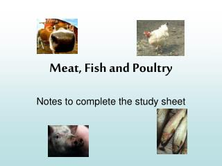 Meat, Fish and Poultry