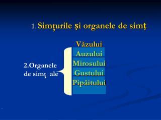 1 . Sim ţurile și organele de simț Văzului Auzului Mirosului Gustului Pipăitului