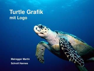 Turtle Grafik