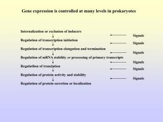 Gene expression is controlled at many levels in prokaryotes