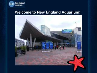 Welcome to New England Aquarium!