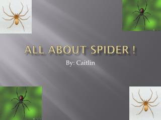 All about spider !