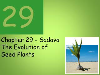 Chapter 29 - Sadava The Evolution of Seed Plants