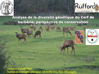 Analyse de la diversité génétique du Cerf de  berbérie : perspective de conservation