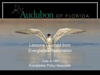 Lessons Learned from  Everglades Restoration Julie A. Hill Everglades Policy Associate