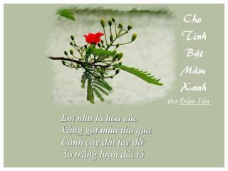 Em như là hoa cúc  Vàng gót mùa thu qua  Cành cây dài tay đỡ  Áo trắng lượn đôi tà