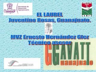 EL LAUREL Juventino Rosas, Guanajuato. MVZ Ernesto Hernández Glez Técnico asesor