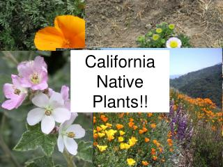 California Native Plants!!