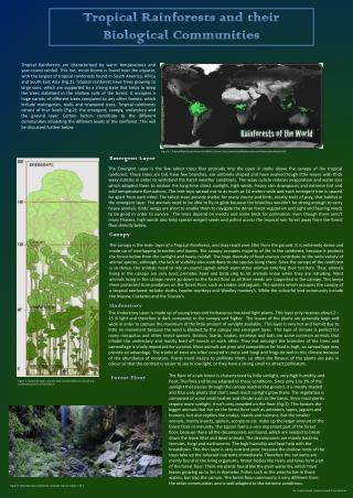 Tropical Rainforests and their Biological Communities