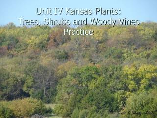 Unit IV Kansas Plants: Trees, Shrubs and Woody Vines Practice
