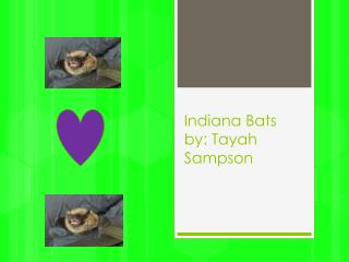 Indiana Bats by:  Tayah S ampson