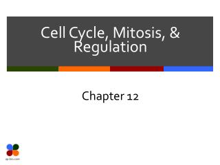Cell Cycle, Mitosis, & Regulation
