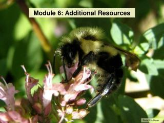 Module 6: Additional Resources