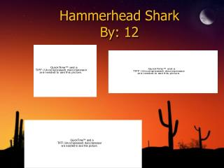 Hammerhead Shark By: 12
