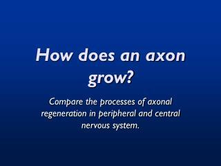How does an axon grow?