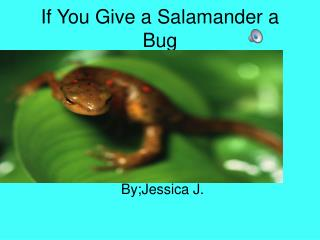 If You Give a Salamander a Bug