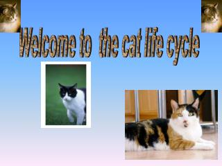 Welcome to  the cat life cycle