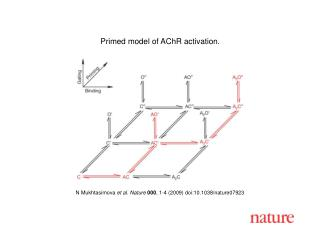 N Mukhtasimova  et al. Nature 000 , 1-4 (2009) doi:10.1038/nature07923