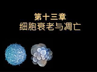 第十三章 细胞衰老与凋亡