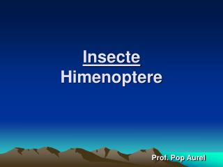 Insecte Himenoptere